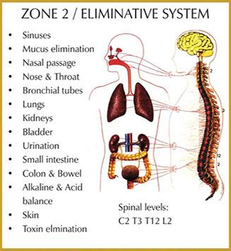 Chiropractic Durham NC Zone 2