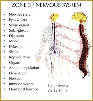 Chiropractic Durham NC Zone 3