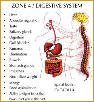 Chiropractic Durham NC Zone 4