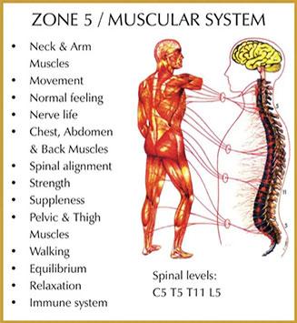 Chiropractic Durham NC Zone 5