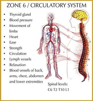 Chiropractic Durham NC Zone 6