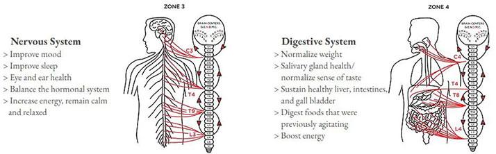 Chiropractic Durham NC Zones 3 & 4