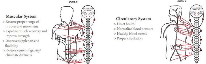 Chiropractic Durham NC Zones 5 & 6
